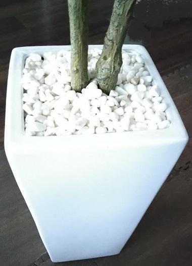 ドリス 人工観葉植物 カシワバゴムノキ